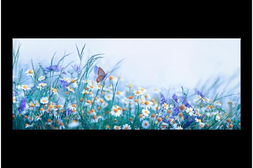Картина Бабочка в цветах